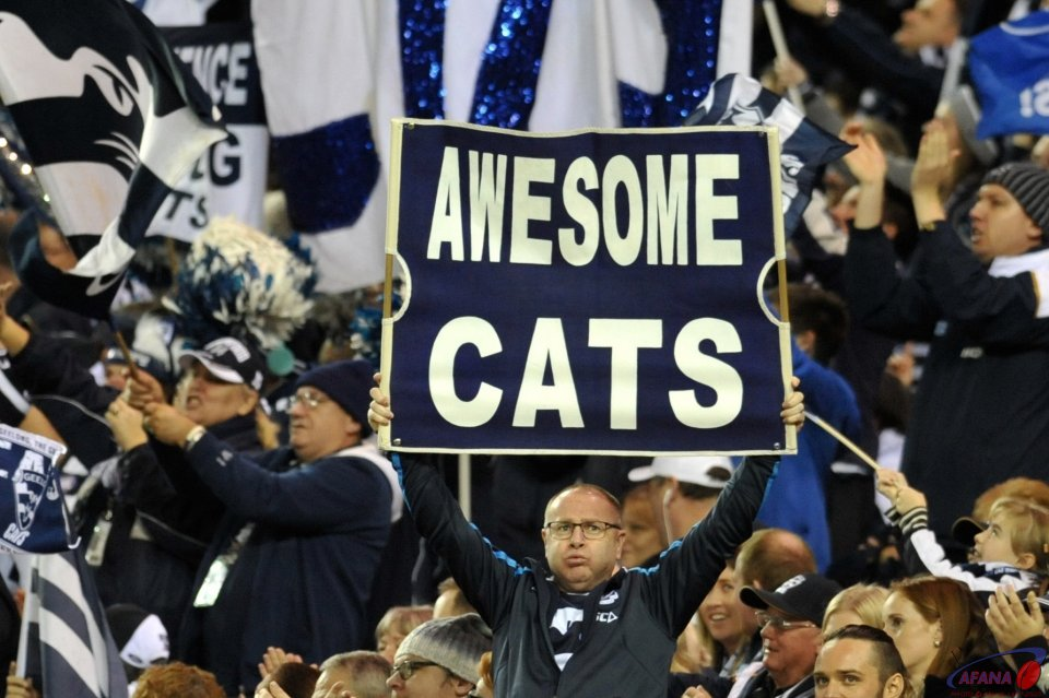 Awesome Cats steamroll the Bulldogs