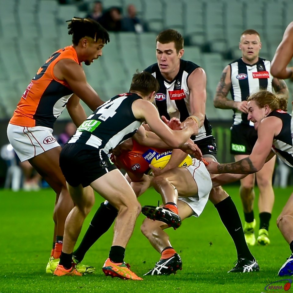 Pies Giants